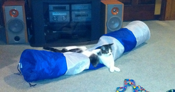 The tunnel is one of our favorite toys! Sometimes we just lie on top of it!