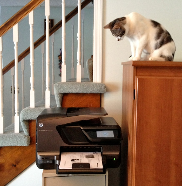 Alex keeping an eye on the printer. So exciting when it shoots out pieces of paper!